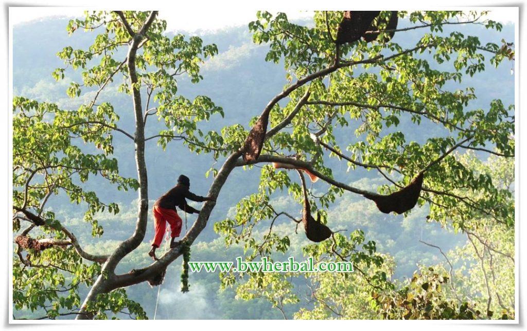 Madu DM 100% Madu Hutan Asli Dari Pegunungan Garut Selatan