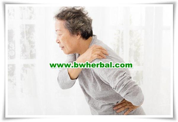 SAMULINPRO Sehat Sendi Obat Herbal khusus Perawatan Tulang & Sendi